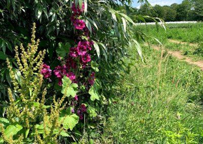 Prachtige wilde bloemen bij herenboeren Boxtel