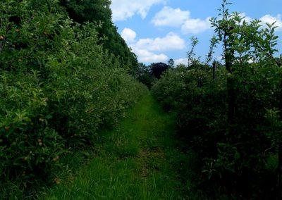 Fruit boomgaard herenboeren boxtel