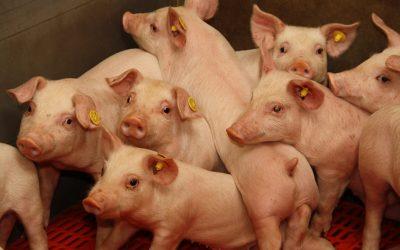 Doorbraak: dieren beter beschermd bij wet