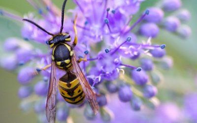 Waar ging het mis met de wespen dit jaar?